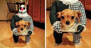Halloween Costumes For Dogs 50 Terrifyingly Pawsome Halloween Costumes For Dogs Bored Panda
