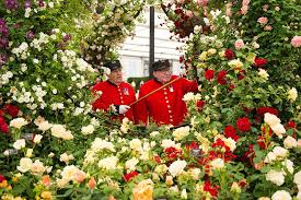 chelsea flower show sees world u0027s best gardeners show off their