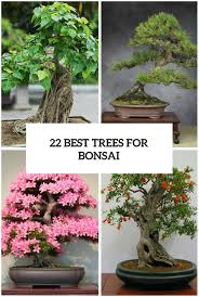 Best Fruit Tree For Backyard Backyards Impressive 22 Best Trees For Bonsai And How To Care