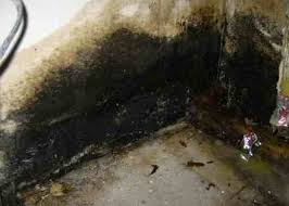 black mold pictures symptoms removal health effects risks
