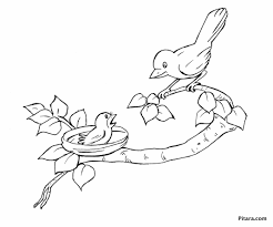 mother u0026 baby bird u2013 coloring page pitara kids network