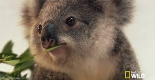 eucalyptus album on imgur