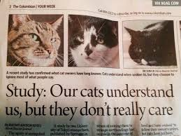 Newspaper Cat Meme - a dozen of the best cat memes this week i can has cheezburger