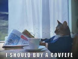 Rich Cat Meme - covfefe cat memes i can has cheezburger