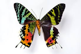 Most Beautiful Colors by These Butterfly Wings Are Beautiful For A Reason U2013 Proof