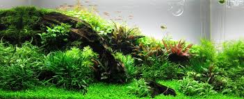 Aquascape Store Aquascaping And Aquarium Aquasabi Online Shop