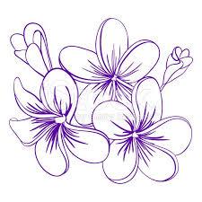 160 best plumeria images on pinterest plumeria flowers flowers