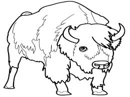 bison coloring pages bison bisoncoloringpages