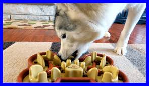 husky eats too fast time for a guzzle muzzle slow feed bowl for