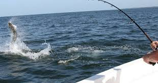 sport fishing in marco island fl