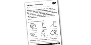 seed dispersal worksheet seed dispersal how seeds are
