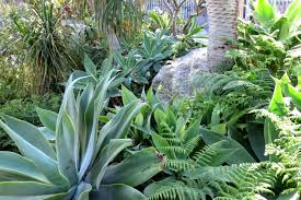 Heat Resistant Plants Top 15 Drought Tolerant Plants For Landscaping