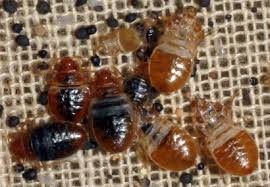 Bed Bugs In Ohio Study Examines Bed Bug Infestations In 2 372 Low Income Apartments