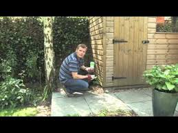 How To Remove Weeds From Patio Getting Rid Of Weeds In Your Gravel Patio U0026 Shed Video