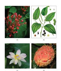 taiga native plants plants biology 1521
