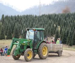 christmas tree farm near fletcher nc best images collections hd