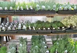 herbs indoors indoor herb gardening portland nursery