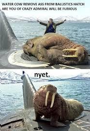 Walrus Meme - huge walrus meme walrus best of the funny meme