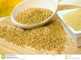 ground mustard organic mustard seeds and ground mustard royalty free stock photo