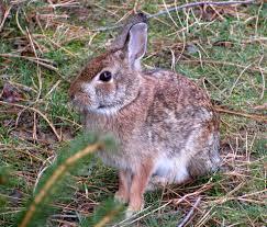 backyard animals nature in the burbs