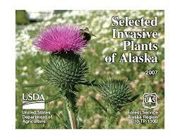 native alaskan plants kenai peninsula cooperative weed management area