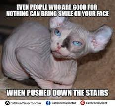 Shaved Cat Meme - funny hairless cat memes funny cute angry grumpy cats memes