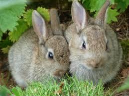 rabbit rabbit rabbit rabbit a librarian by any other name