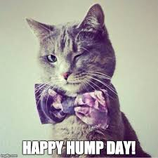Hump Day Meme - hump day cat blank template imgflip