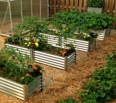 new vegi garden beds garden pinterest gardens garden ideas