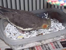 where to shred papers https i pinimg 736x c0 99 3b c0993b7f132d75b