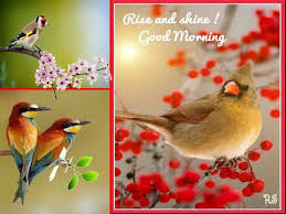 sweet greetings for a lovely morning free morning ecards