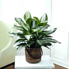 best plants for low light low light hanging plants beautiful the best indoor plants for low