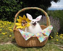 beautiful easter baskets auggie s doggie bloggie