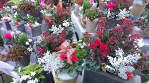 plants for gifts riverside garden centre