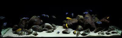 Mountain Aquascape How To Set Up And Aquascape A Cichlid Habitat