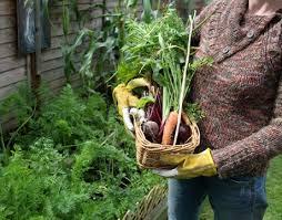 organic gardening u2013 how to start an organic garden