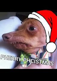 Christmas Dog Meme - 196 best merry xmas from dog cat images on pinterest merry