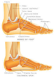 Sole Of The Foot Anatomy Sore Feet Best Work Boots For Plantar Fasciitis Best Work