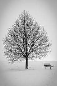 25 unique winter trees ideas on snow forest snow