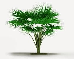 tree symbol pashudhan and animal science palm tree symbol of victory