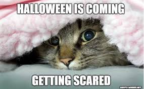 Memes Scared - funny halloween cat memes happy wishes