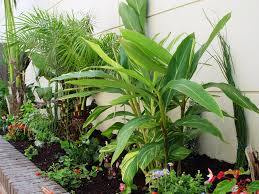 best tropical house plants ideas best home decor inspirations