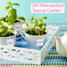 diy teacups craft planters garden starter indoor garden