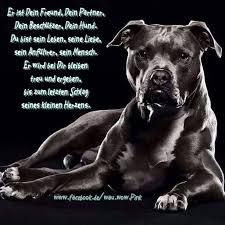 sprüche hund treue 255 besten ein leben ohne hund ist sinnlos bilder auf