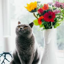 send flowers to someone need to send flowers to someone on cat island yes we can