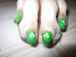 dog toes st patricks day walking the blog
