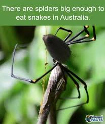 Damn Nature You Scary Meme - big spiders damn nature you scary know your meme