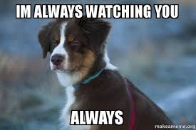 Watching You Meme - im always watching you always unsure dog make a meme