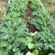 incredible vegetable garden florida yes you can grow a garden of