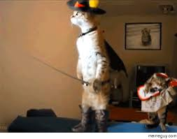 Halloween Cat Meme - meme cat gif by saithiwield find download on gifer